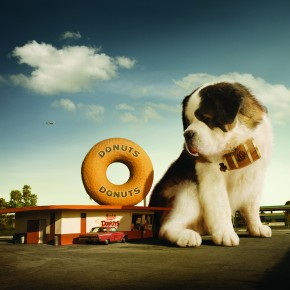 "Giant Saint Bernards: ""We're in California in a big way!"""