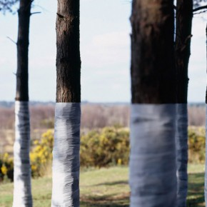 Tree, Line: Ingenious Photographs Of Where The Horizon Ends
