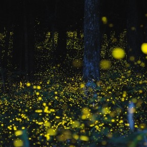 Glowing Trails of Light: Light Painting With Fireflies