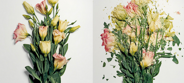 Shattered Floral Photography: Flowers Soaked in Liquid Nitrogen Smash Into Pieces